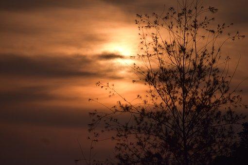 Tree, Sihouette, Backlighting, Nature, Sunset, Dusk