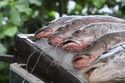 Fish, Animal, Fish Market, Marine, Sea Animal, Market