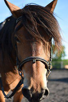 Horse, Equine, Equestrian, Wild, Animal, Nature
