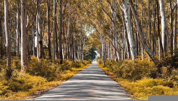 Path, Road, Lane, Nature, Trees, Forest, Woods