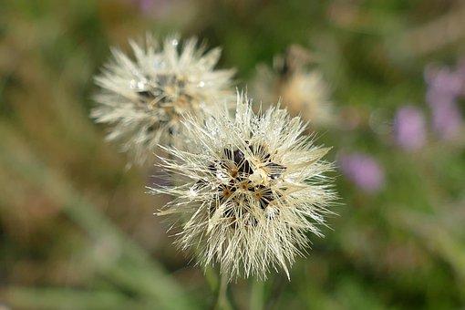 Flower, Dew, Morning Dew, Wet, Drop, White, Flora
