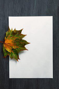 Maple Leaves, Paper, Blank Paper, Copy Space
