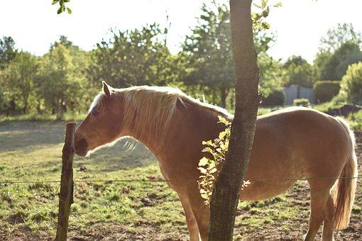 Horse, Equine, Animal, Equus Caballus, Mammal, Pasture