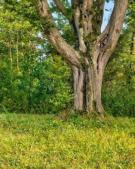 Tree, Tree Trunk, Bark, Tree Bark, Grass, Plants