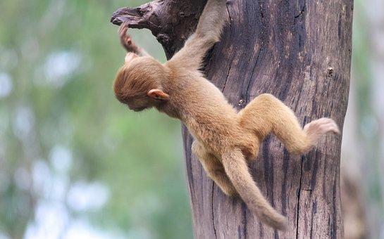 Monkey, Tree, Primate, Mammal, Wild, Wild Animal