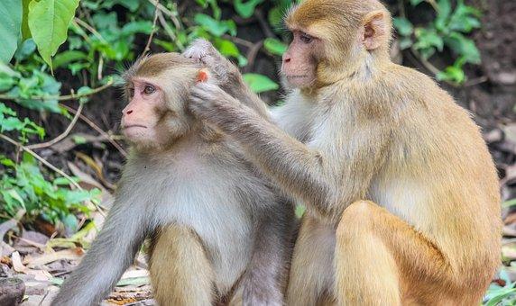 Monkeys, Primates, Mammals, Wild, Wild Animals
