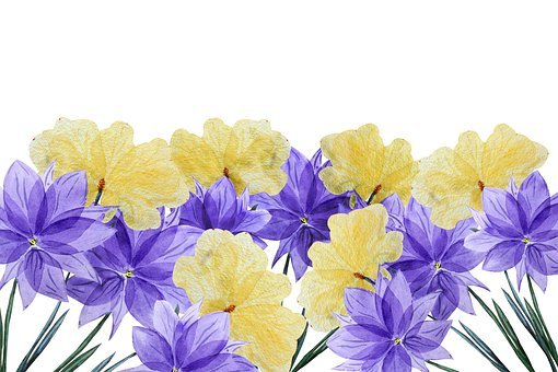 Flowers, Floral, Watercolor, Background