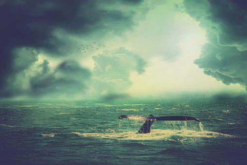 Whale, Sea, Waves, Birds, Sky, Clouds, Fantasy, Storm