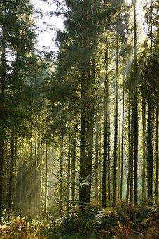 Trees, Undergrowth, Forest, Woods, Wildlife, Wilderness