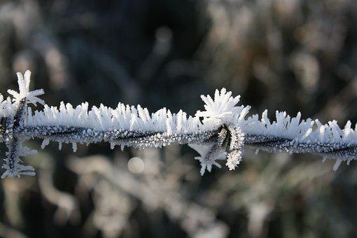 Frost, Frozen Barbed Wire, Frozen, Barbed Wire, Winter