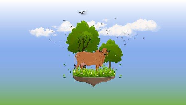 Cow, Horns, Grass, Cattle, Animal, Farm, Nature