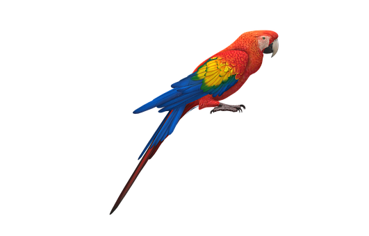 Parrot, Cockatoo, Bird, Colorful Feathers