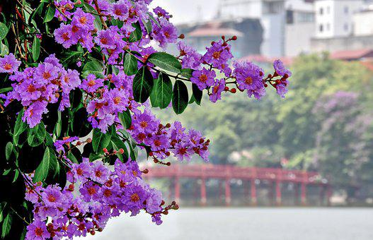 Flowers, Petals, Leaves, Tree, Branches, Foliage, Buds