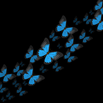 Butterflies, Blue Butterflies, Insects, Flight, Flying