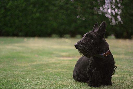 Dog, Canine, Pet, Domestic, Grass, Garden, Cute, Animal