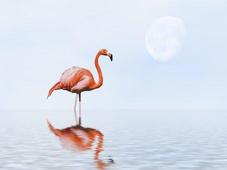 Flamingo, Bird, Fantasy, Water, Water Reflection