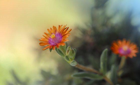 Flowers, Petals, Buds, Plant, Nature, Colorful, Garden