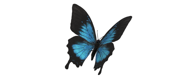 Ulysses Butterfly, Butterfly, Insect, Lepidoptera, Bug