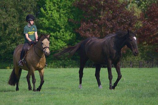 Horses, Equine, Equestrian, Man, Rider, Helmet, Friend