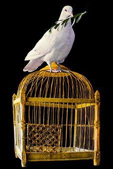 Bird, Dove, Cage, Symbol, Peace, Olive Branch, Freedom