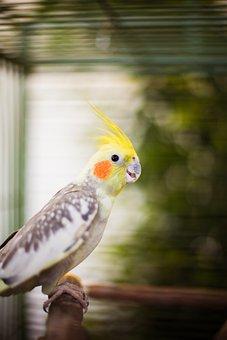 Cacatua, Bird, Parrot, Plumage, Avian, Colorful, Peak