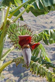Banana, Shrub, Tree, Blossom, Sand, Coast, Mountains