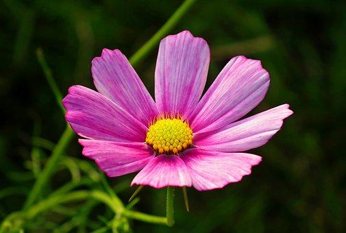 Flowers, Petals, Stem, Plants, Garden, Nature, Blooming