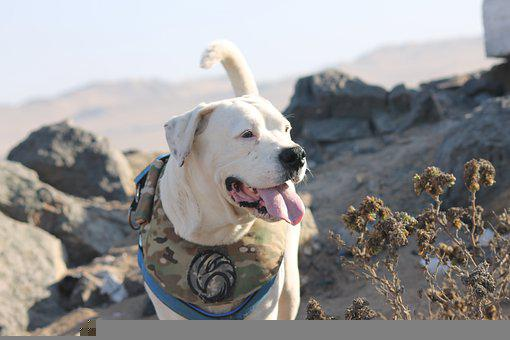 Dog, Canine, Pet, Domestic, Mountain, Rocks, Plants
