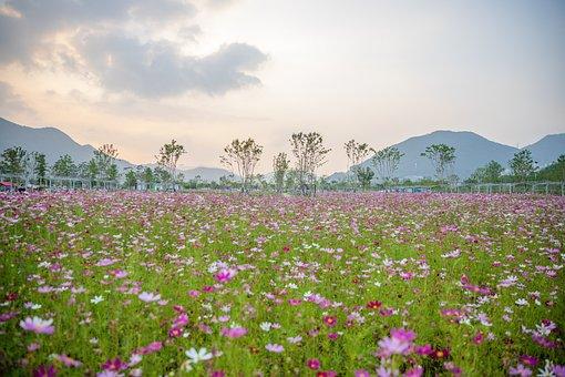 Flowers, Meadow, Field Of Flowers, Field, Nature