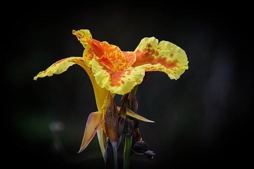 Flower, Bicolored Flower, Bicolored Petals, Bloom