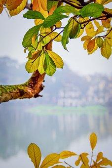 Leaves, Foliage, Tree, Fall Season, Autumn Season