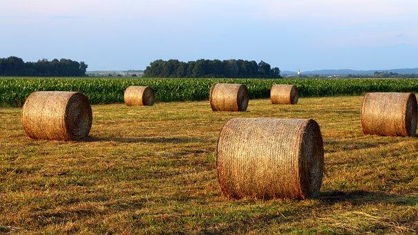 Hay, Hay Bales, Hayfield, Straw Bales, Bales, Landscape
