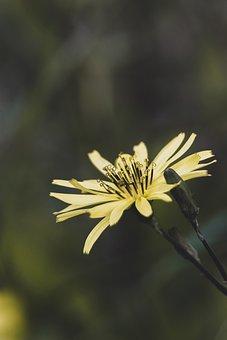 Flower, Petals, Stem, Pistils, Wild, Flora, Botany