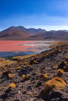 Lake, Flamingos, Minerals, Plants, Vegetation