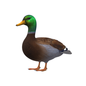 Duck, Icon, Duck Icon, Mallard, Bird, Plumage, Ave