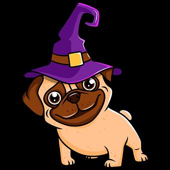 Dog, Witch, Hat, Pug, Pet, Cute
