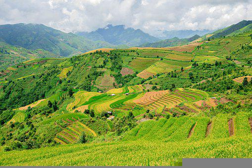Terraces, Rice Terraces, Rice Paddies, Plantation
