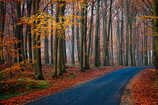 Autumn Season, Fall Season, Road, Lane, Path, Trail