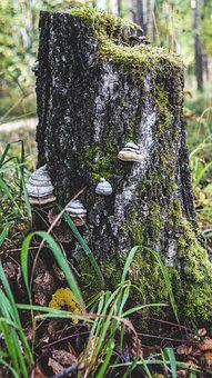 Tree Stump, Moss, Forest, Tree, Nature, Mushrooms