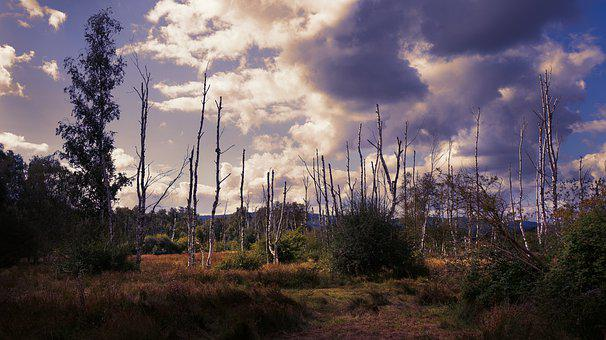 Landscape, Trees, Nature, Foliage, Swamp, Moorland