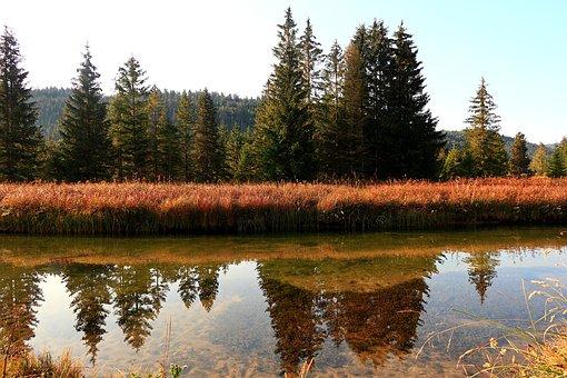 River, Riverbank, Reflection, Bank, Trees, Wildlife