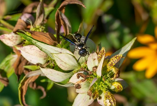 Wasp, Insect, Bug, Animal, Wildlife, Fauna, Sting