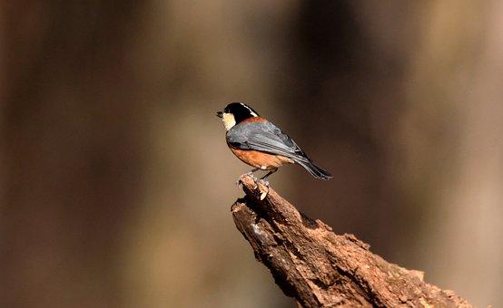 Bird, Beak, Bill, Feathers, Plumage, Avian, Animal