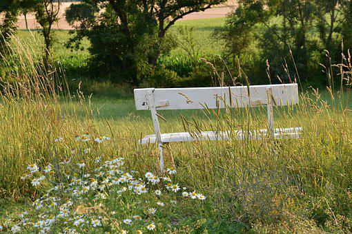 Bank, White Bench, Wildflowers, Cattails, Reed, Grass