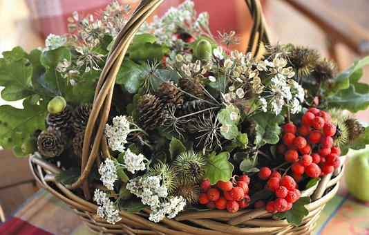 Basket, Plants, Fruits, Berries, Basket Of Plants