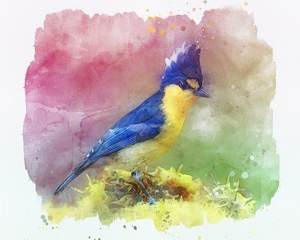 Bird, Animal, Painting, Avian, Plumage, Wildlife