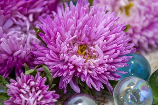 Purple Flowers, Purple Petals, Bloom, Blossom, Flowers