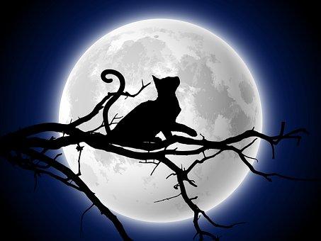 Full Moon, Silhouette, Cat's Silhouette, Cat