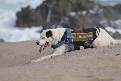 Dog, Canine, Pet, Domestic, Sand