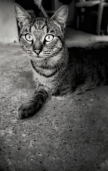 Cat, Kitten, Pet, Animal, Domestic, Wounded, Face, Eye